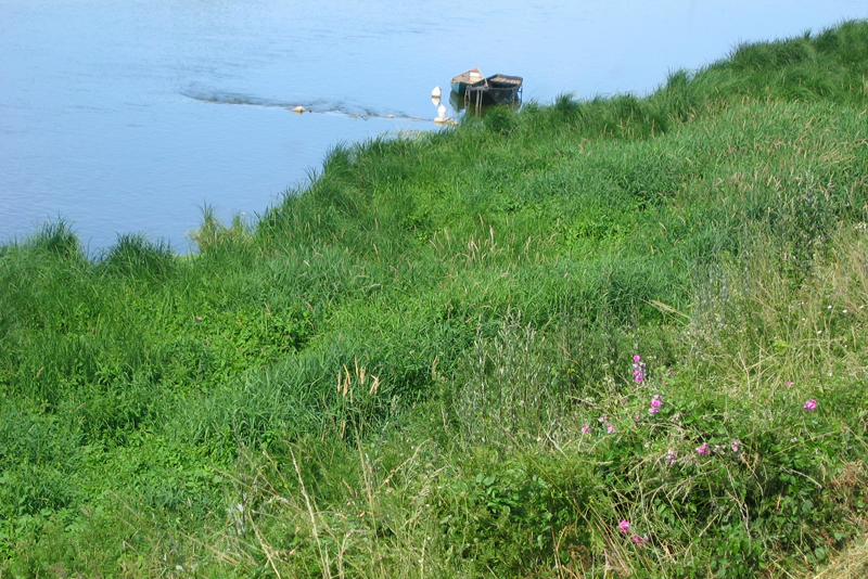 Levée herbeuse